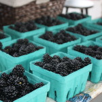 blackberries from Dream Mountain Farm