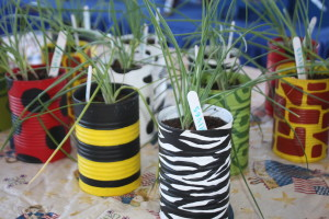 plant starters from Dream Mountain Farm
